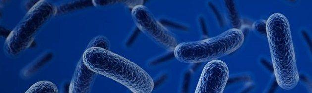 bacteria en agua de grifo